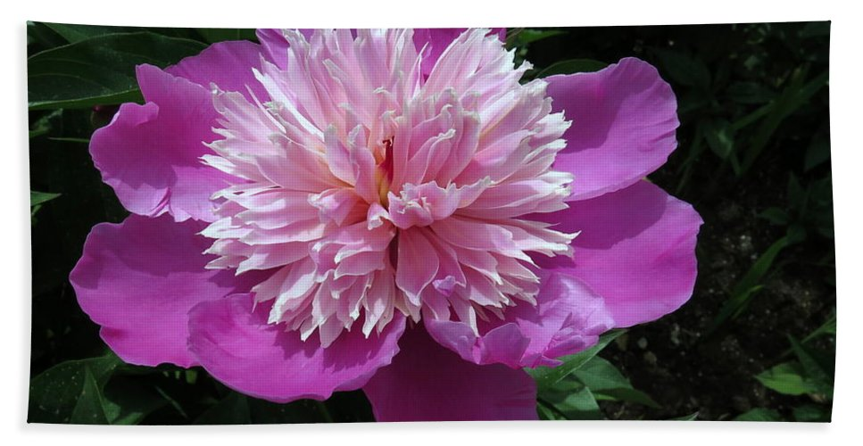 Flowers Bath Sheet featuring the photograph One Of My Favorite Flowers by Darrell MacIver