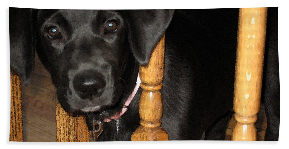 Dog Hand Towel featuring the photograph One Way Only by Rhonda Chase