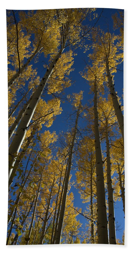 Fall Bath Sheet featuring the photograph Onward Toward The Sky by Jerry McElroy
