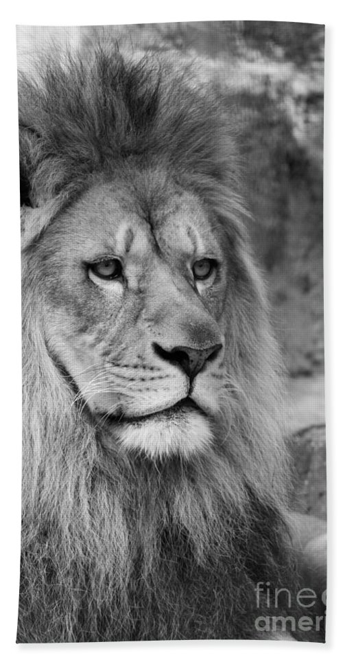 Lion Hand Towel featuring the photograph Onyo #18 Black And White  by Judy Whitton