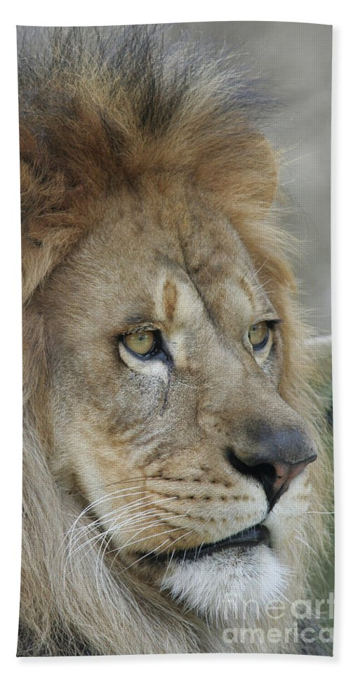 Lion Bath Sheet featuring the photograph Onyo #25 by Judy Whitton