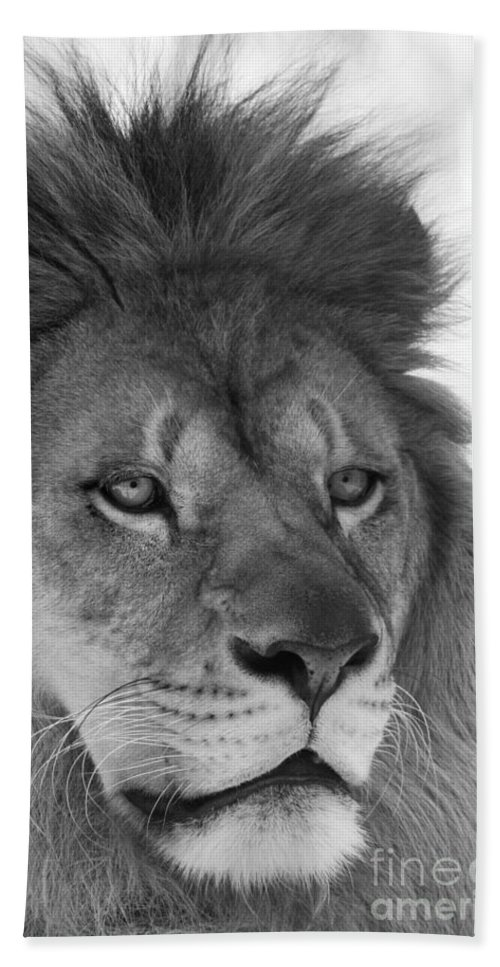Lion Bath Sheet featuring the photograph Onyo #3 Black And White by Judy Whitton