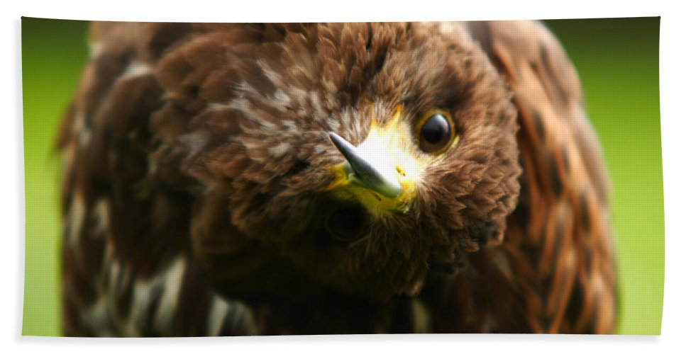 Buzzard Bath Towel featuring the photograph Oops I Have Gone Mad by Angel Ciesniarska