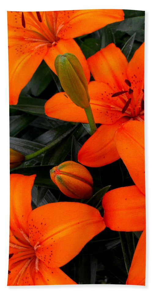 Botanical Hand Towel featuring the photograph Open And Closed by Ruth Palmer