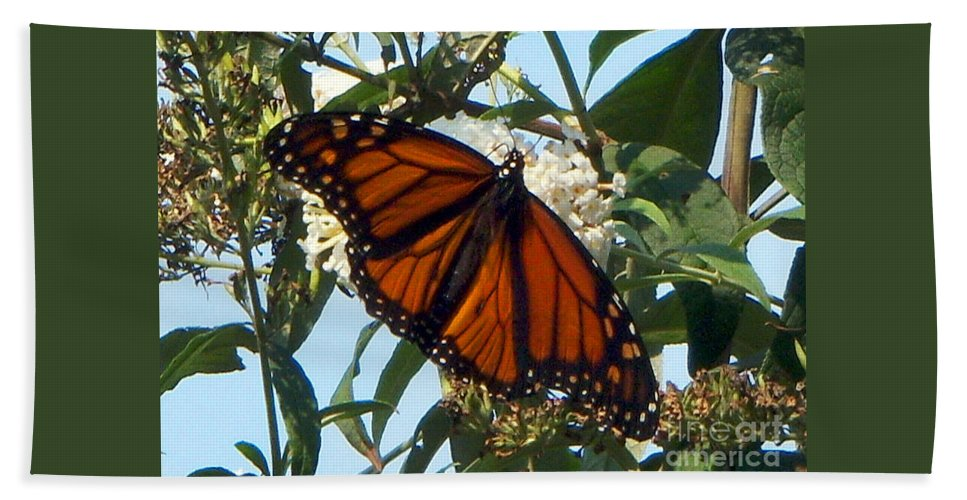 Butterfly Bath Sheet featuring the photograph Opened Wings by CAC Graphics