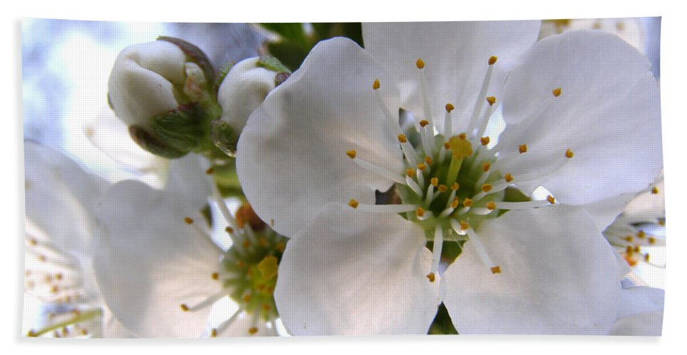 Cherry Blossoms Hand Towel featuring the photograph Opening Act - Cherry Blossoms by Angie Rea