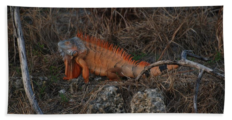 Brush Hand Towel featuring the photograph Oranage Iguana by Rob Hans