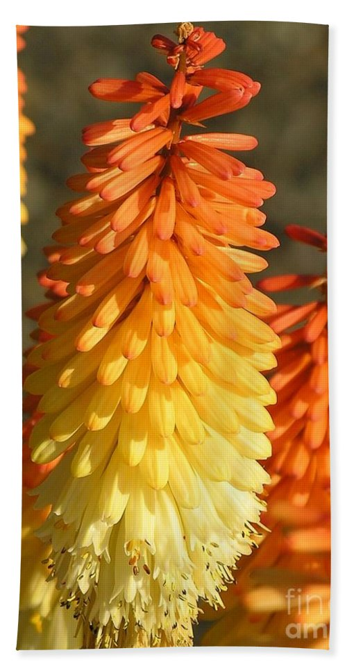 Orange Bath Towel featuring the photograph Orange And Gold Flower by Diane Greco-Lesser