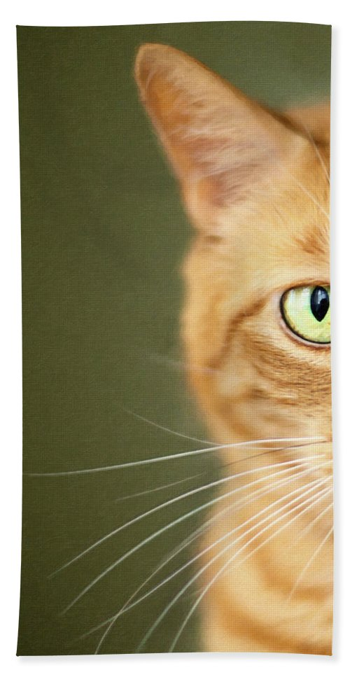 Animals Hand Towel featuring the photograph Orange And Green by Sue Collura