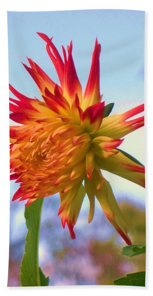 Orange Hand Towel featuring the painting Orange And Yellow Dahlia by Eric Schiabor