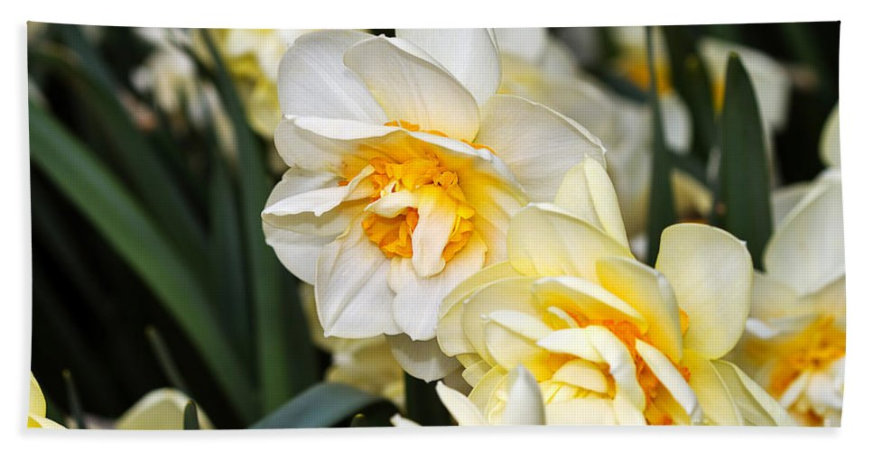 Flower Hand Towel featuring the photograph Orange And Yellow Double Daffodil by Louise Heusinkveld
