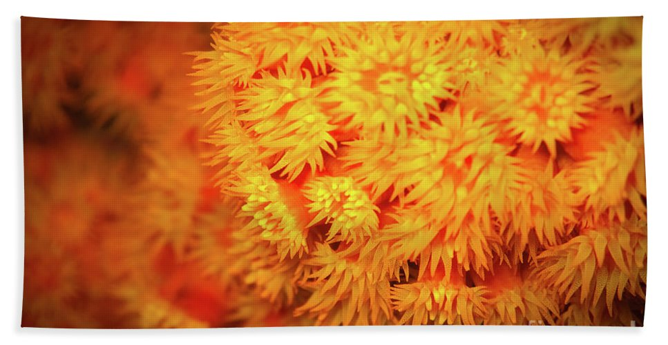 Orange Anemones Bath Sheet featuring the photograph Orange Anemones by Doug Sturgess