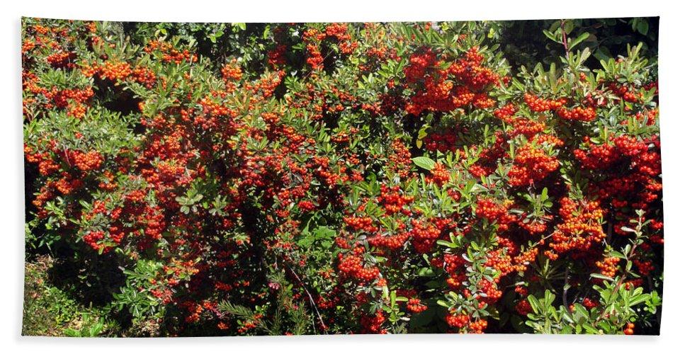 Orange Berries Big Old Bush Hand Towel For Sale By Sofia Metal Queen