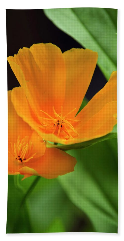 California Poppies Hand Towel featuring the photograph Orange California Poppies by Christina Rollo