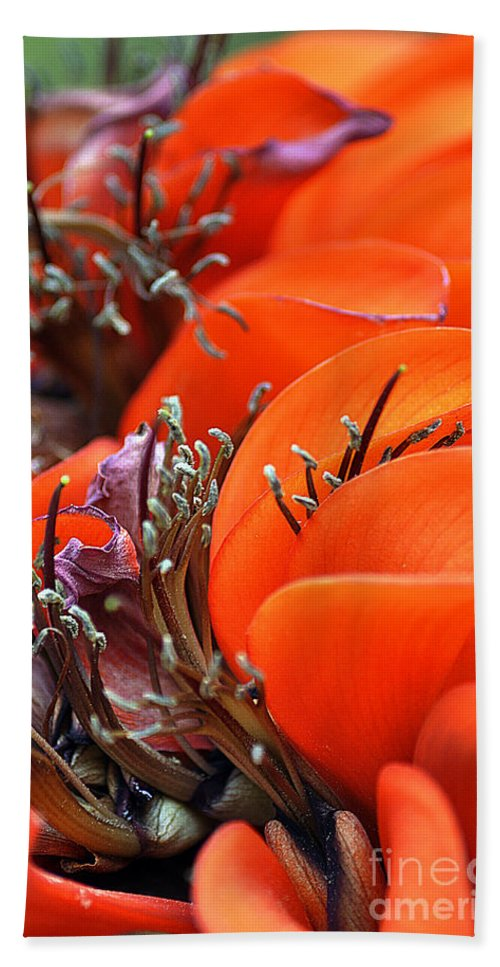 Clay Bath Towel featuring the photograph Orange by Clayton Bruster