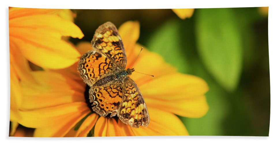Pearl Crescent Butterfly Hand Towel featuring the photograph Orange Crescent Butterfly by Christina Rollo