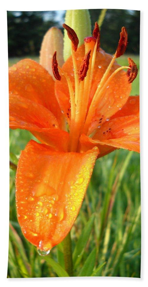 Dew Drop Hand Towel featuring the photograph Orange Lily Dew Drop by Kent Lorentzen