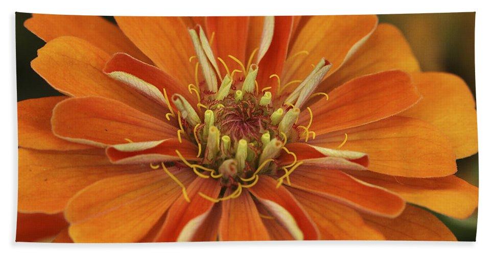 Flower Hand Towel featuring the photograph Orange Orange Orange by Deborah Benoit