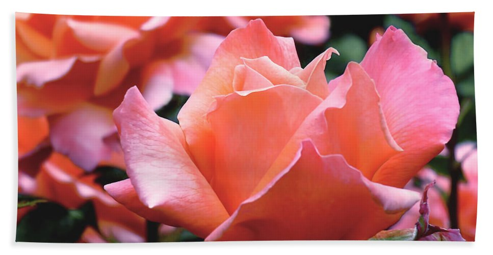 Rose Bath Sheet featuring the photograph Orange-pink Roses by Rona Black