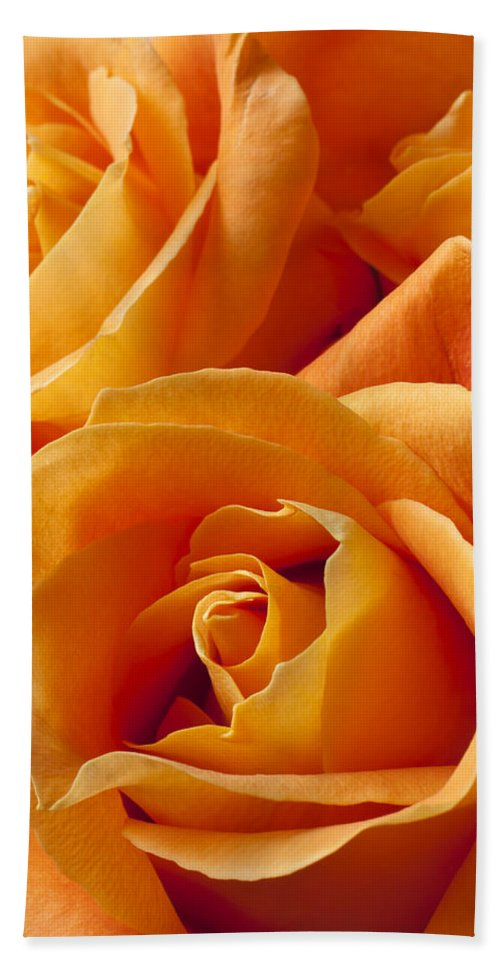 Orange Bath Sheet featuring the photograph Orange Roses by Garry Gay