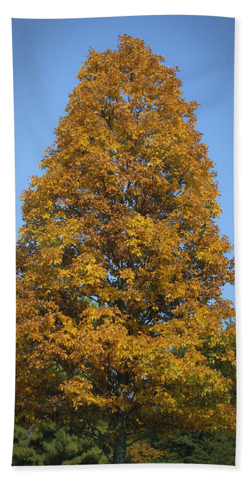Fall Hand Towel featuring the photograph Orange Tree Pipestem Short Course by Teresa Mucha