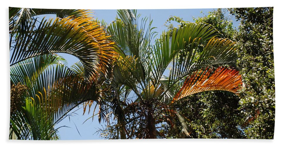 Palms Bath Towel featuring the photograph Orange Trees by Rob Hans