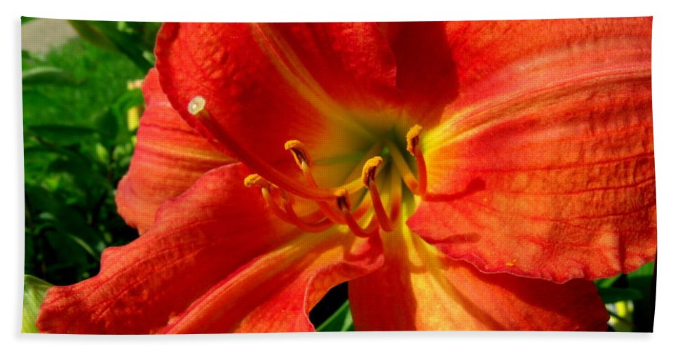 Lily Bath Sheet featuring the photograph Orange Trumpeting Lily by Erin Rednour