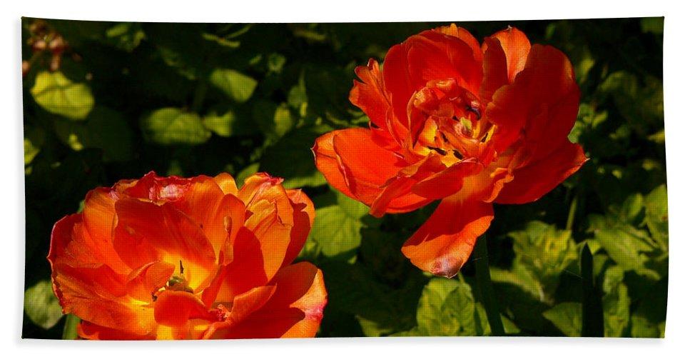 'orange Tulips' Bath Towel featuring the photograph Orange Tulips In My Garden by Helmut Rottler