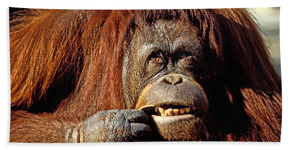 Animal Bath Sheet featuring the photograph Orangutan by Garry Gay