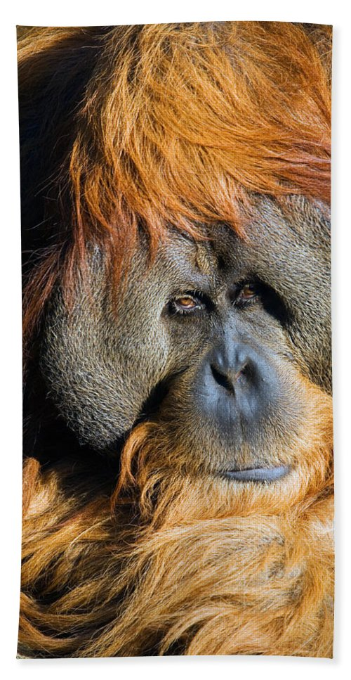 Orangutan Hand Towel featuring the photograph Orangutan by Randall Ingalls
