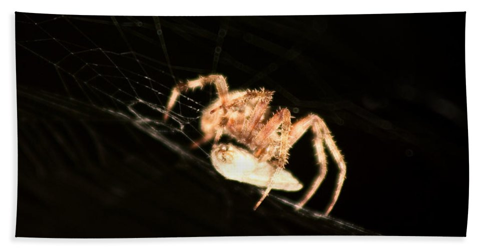 Spider Bath Sheet featuring the photograph Orb Spider by Anthony Jones