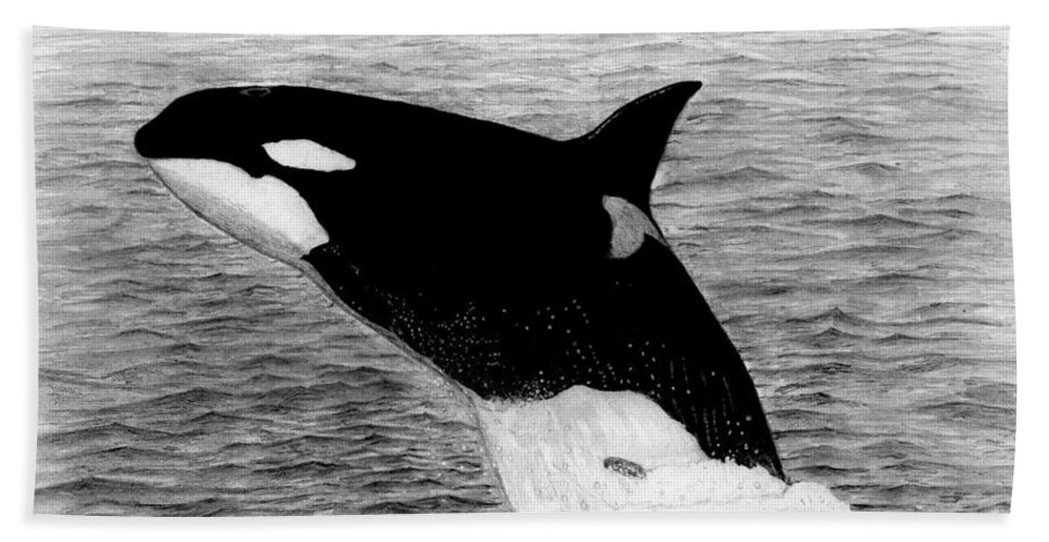 Orca Bath Sheet featuring the drawing Orca by George Sonner