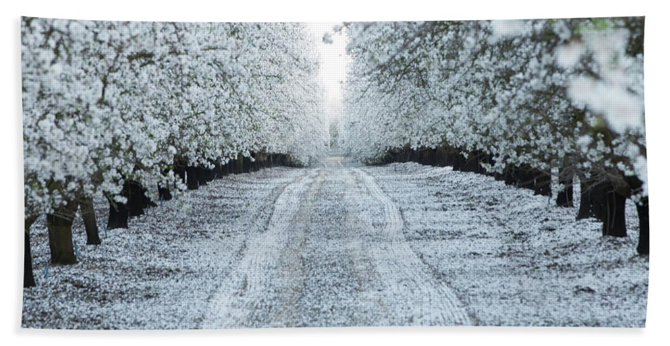 Almond Orchard Bath Sheet featuring the photograph Orchard In White by Michael and Kristi Knevelbaard