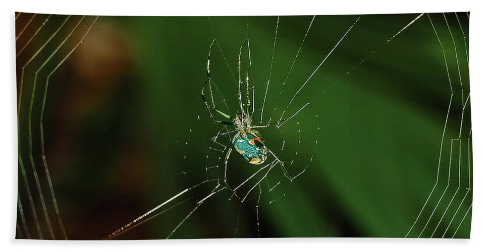 Spider Bath Sheet featuring the photograph Orchard Orb by DigiArt Diaries by Vicky B Fuller