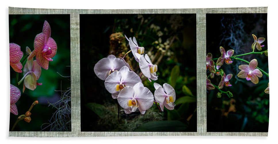Orchid Bath Sheet featuring the photograph Orchid 1 Triptych by Greg Kluempers