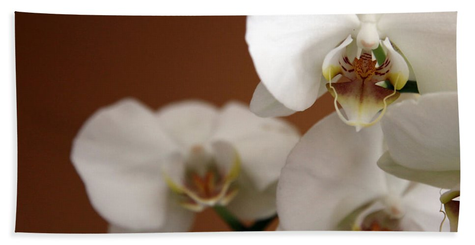 Orchid Bath Sheet featuring the photograph Orchid by Amanda Barcon