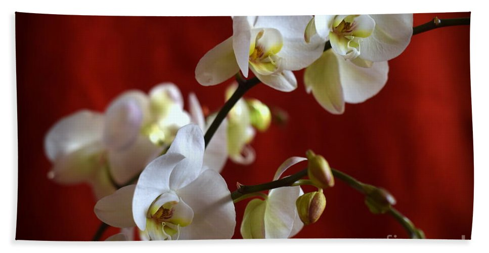 Orchid Hand Towel featuring the photograph White Orchid by Camelia C
