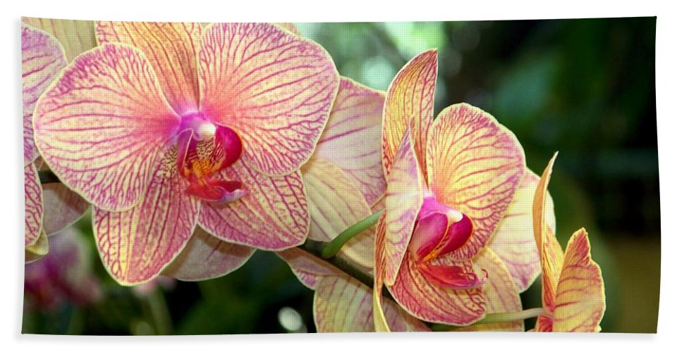 Orchid Hand Towel featuring the photograph Orchid Delight by Karen Wiles