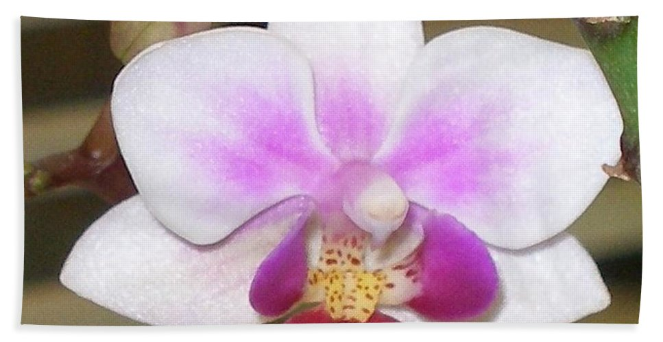 Purple Bath Towel featuring the photograph Orchid Explosion by Maria Bonnier-Perez
