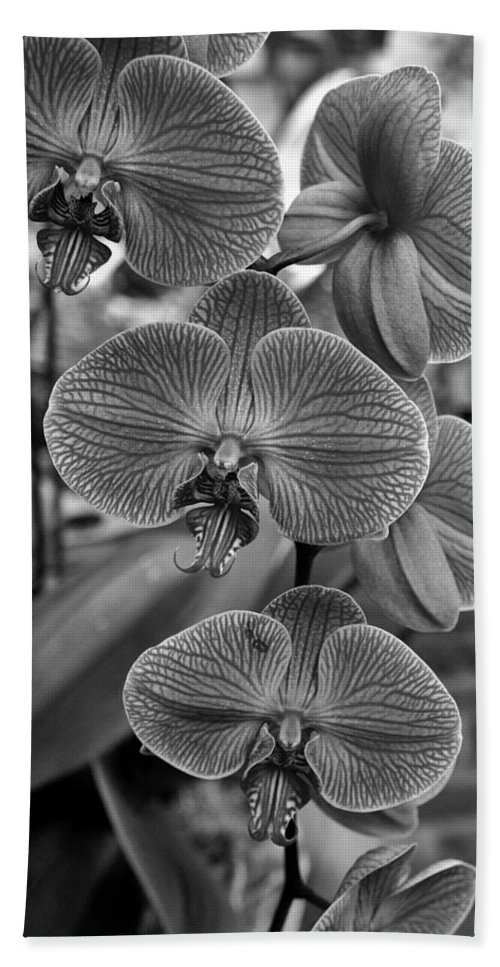 Ann Keisling Hand Towel featuring the photograph Orchid Glory Black And White by Ann Keisling