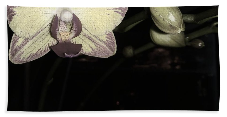 Orchid Hand Towel featuring the photograph Orchid In Bloom by Ladibug Love