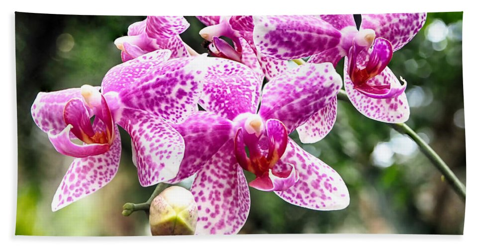 Orchid Hand Towel featuring the photograph Orchid Phalaenopsis Carnival Bonsall by C H Apperson