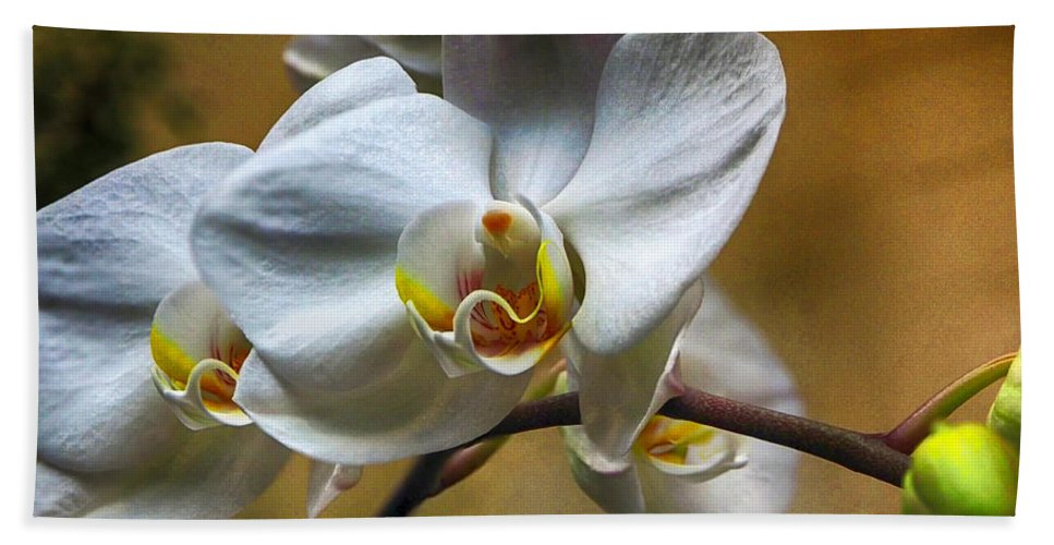 Orchid Hand Towel featuring the photograph Orchid Phalaenopsis Mattie's Prairie by C H Apperson