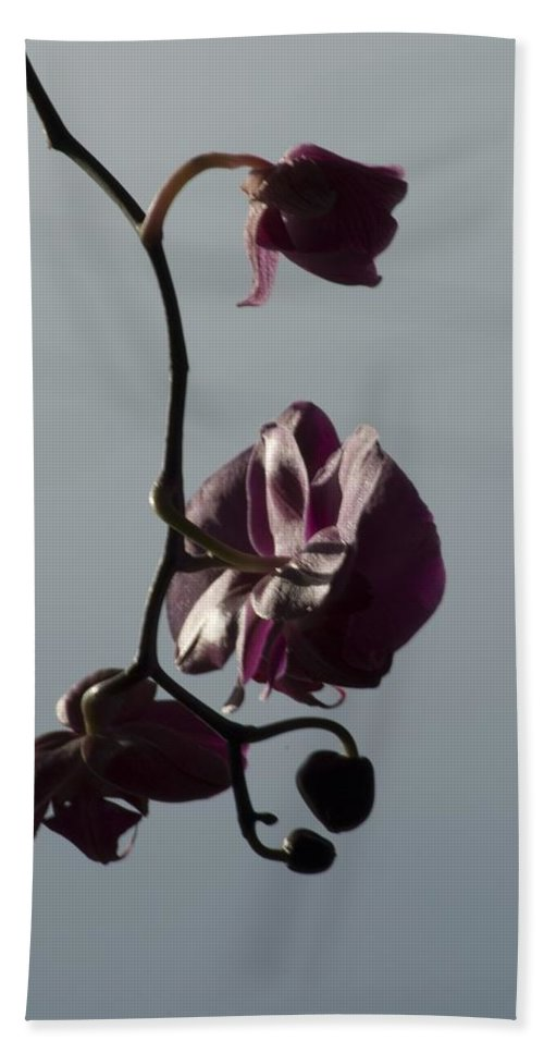 Flower Hand Towel featuring the photograph Orchid by Sara Stevenson