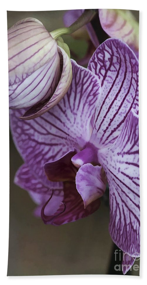 Flower Bath Towel featuring the photograph Orchid Strips by Deborah Benoit