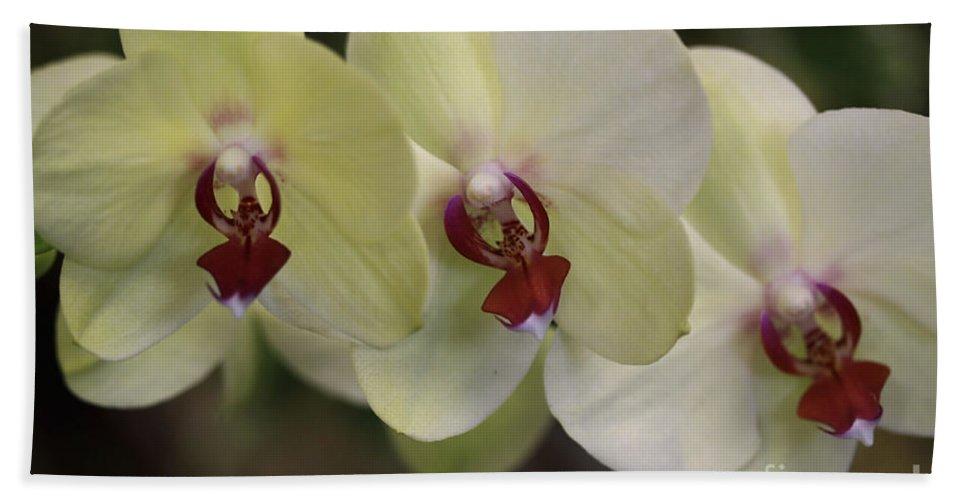Orchids Hand Towel featuring the photograph Orchid White Trio by Deborah Benoit