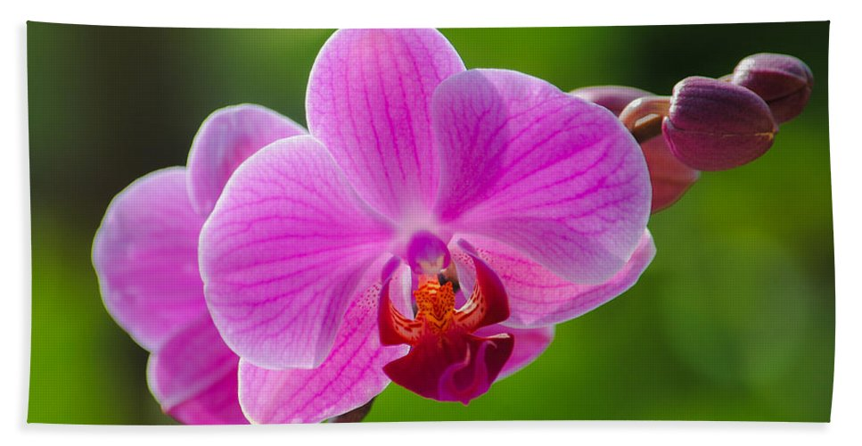 Orchid Hand Towel featuring the photograph Orchids by Megan Martens