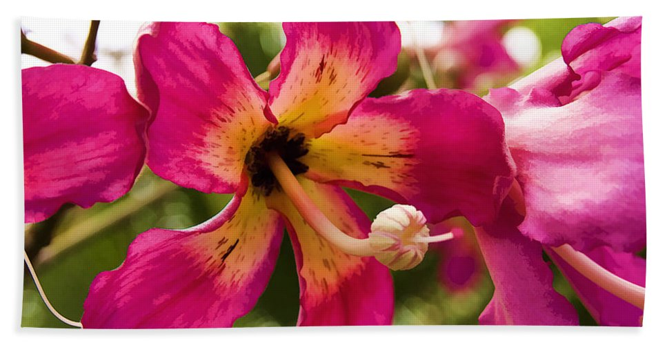 Orchid Hand Towel featuring the photograph Orchids by Ricky Barnard