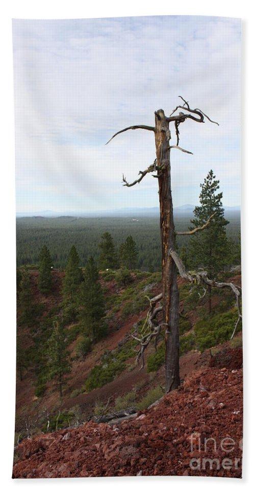 Oregon Landscape Bath Sheet featuring the photograph Oregon Landscape - Confused Tree At Lava Butte by Carol Groenen