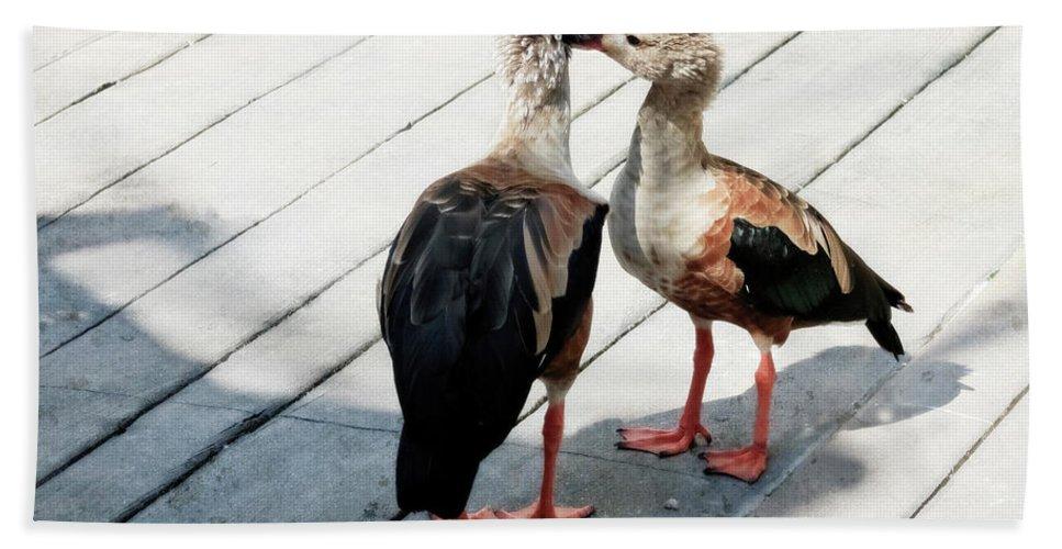 Bird Bath Sheet featuring the photograph Orinoco Geese Touching Heads On A Boardwalk by Sharon Minish